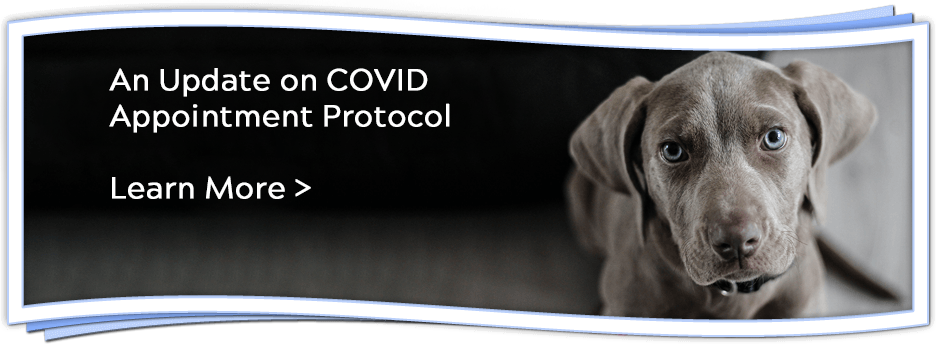 An Update on COVID Appointment Protocol - learn more